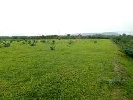 6 bigha genral land for sell in adila kapren bundi