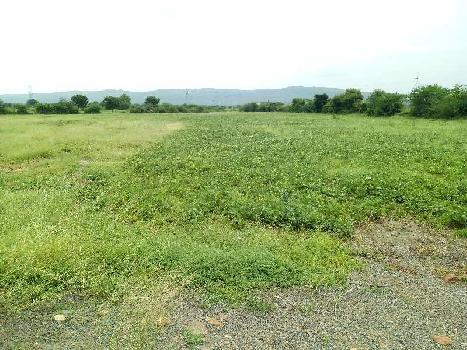 19 bigha farm land for sell in malakpura village bundi