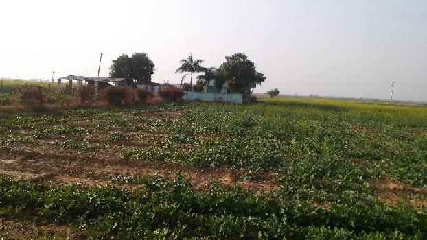 104 bigha farm land for sell in uniyara tonk