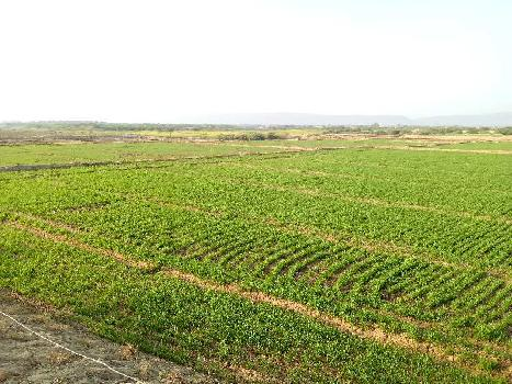 11 bigha farm land for sell in khatkad bundi