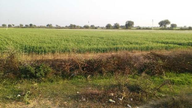 260 bigha land for sell in roteda village bundi