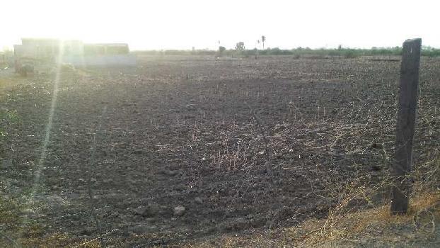 19 bigha farm land for sell in garjani village bundi