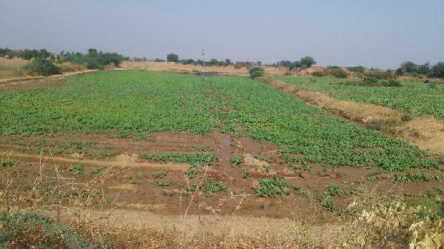 16 bigha farm land for sell in chhan village bundi