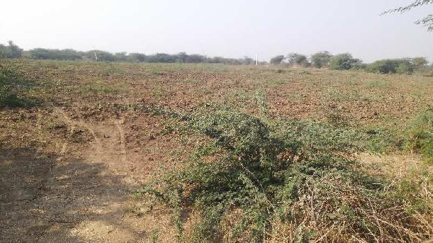 135 bigha farm land for sell in mandariya village kota