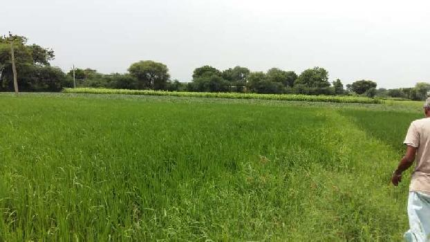agriculture land for sell in bhavpura bundi