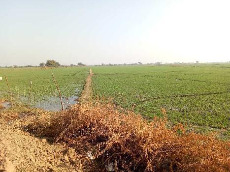 agriculture land for sell in kyawada bundi