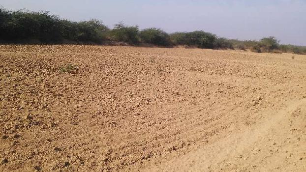 agriculture land for sell in kiwara sawai madhopur