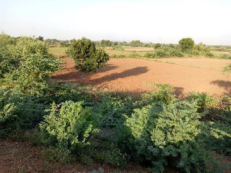 agriculture land for sell in makadwali ajmer