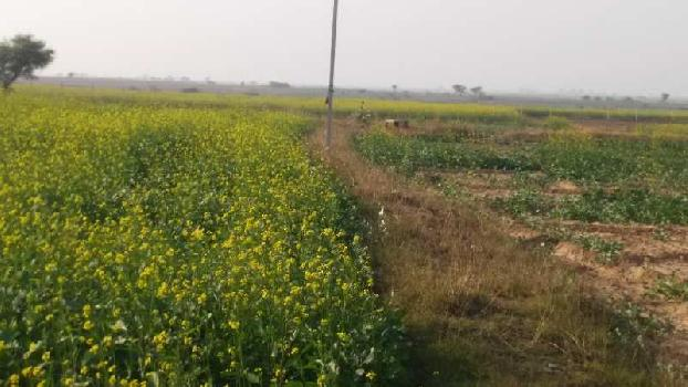 agriculture land for sell in rashmi village bhilwara