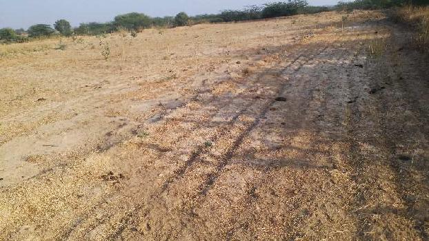 100bigha farm land in baswada bundi