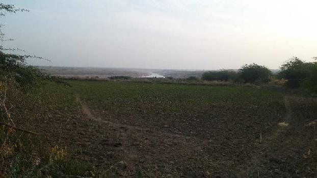 16 bigha farm land for sell
