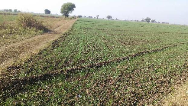 6 bigha farm land for sell in notada, BUNDI