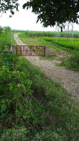 AASAN RIVER FARMS