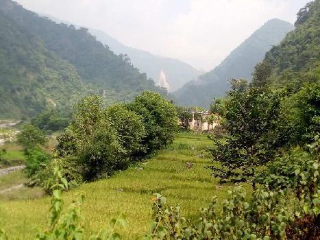 Maldevta Dholagiri Farms
