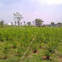 1220sq.ft.residential Plot for Sale At Krishnagiri