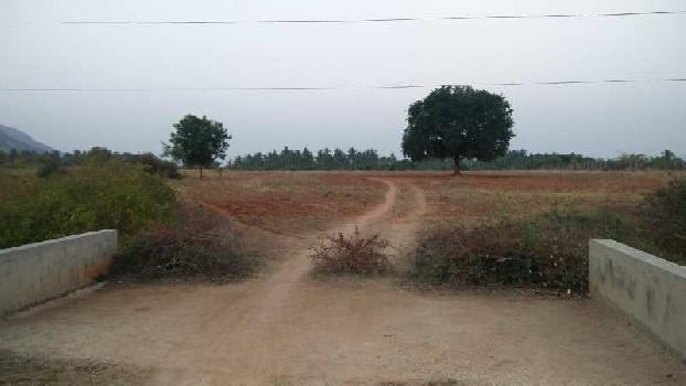 ever greenindia property