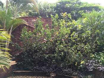 2 BHK Flats & Apartments for Sale in Candolim, Goa