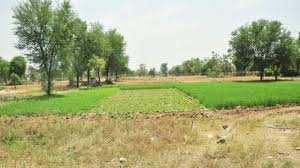 Agriculture Land For Sale In Bal Pali Village Bhiwani