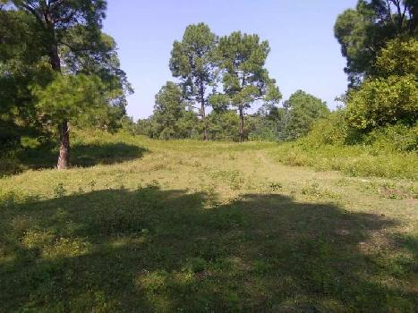 Agricultural/Farm Land for Sale in Morni Hills, Panchkula