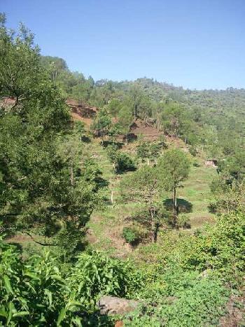 Agricultural/Farm Land for Sale in Morni, Panchkula