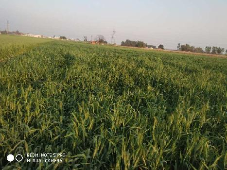 18 acres land for sale near raipur rani district ambala tehsil narainghar panchkula