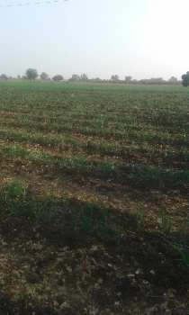 4.5Bigha agriculture land in khedi just near to Avhane