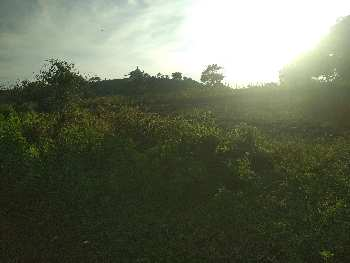 4.5Acer land just 10km from Bhusawal