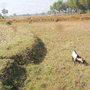 Agricultural/Farm Land for Sale in Bardhaman