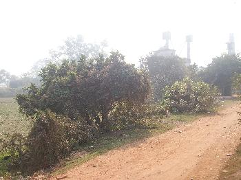 Commercial Lands /Inst. Land for Sale in Bardhaman