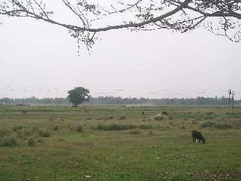 Agricultural Land For Sale In Sukur, Bardhaman