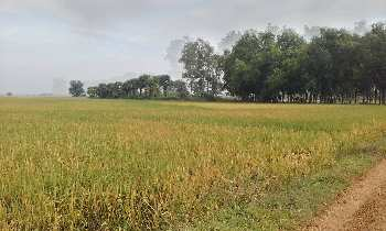 10 bigha agri.land sell in orgram, Bardhaman