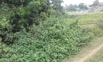 15 bigha agri.land sell in orgram, Bardhaman