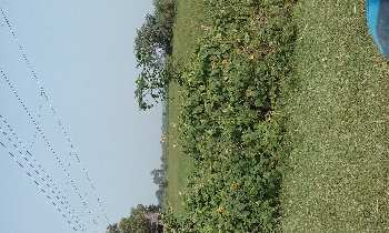 20 bigha agri.land sell in orgram, Bardhaman