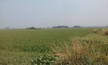 25 bigha agri.land sell in orgram, Bardhaman