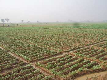 50 bigha agri.land sell in orgram, Bardhaman