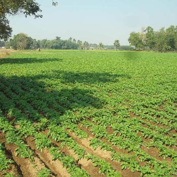 75 bigha agri. Land sell in Masagram near nh2 front, Bardhaman