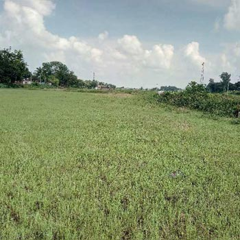 10Bigha Agricultural land sell in Orgrm,Bardhaman