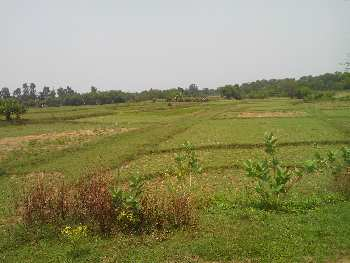 12 Bigha Agricultural land sell in Orgram,Bardhaman