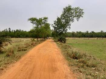 30 Bigha Agricultural land sell in Orgrm,Bardhaman