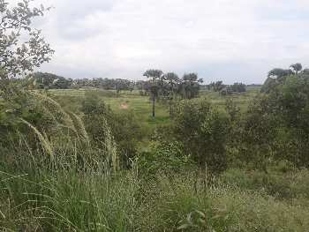 30 bigha agri. land sell in near Kurhmun,Bardhaman