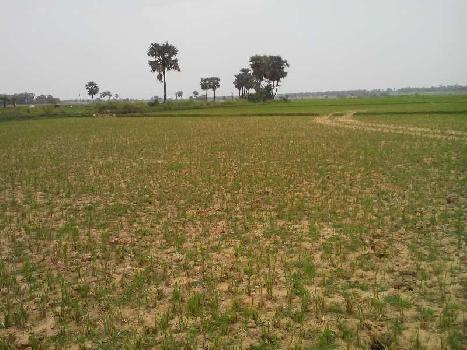 8 Bigha Agricultural land sell in Orgrm,Bardhaman