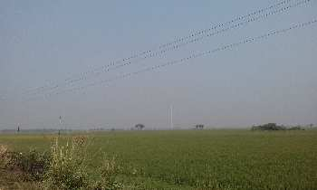 18 Bigha Agricultural land sell in Orgrm,Bardhaman