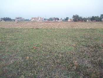 7 Bigha Agriculture land sell In Nurpur Bardhaman