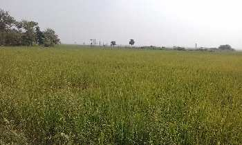 15 Bigha Agriculture land sell In Nurpur Bardhaman