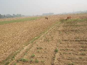 10 Bigha Agricultural land sell in Kashipur,Bardhaman