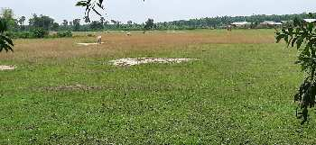 10 Bigha Agriculture land sell In Ausgram Bardhaman