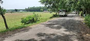 15 Bigha Agriculture land sell In Ausgram Bardhaman