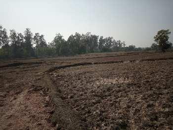 15 Bigha Agri. land sell in Ramchandrapur Orgram Bardhaman