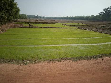 20 Bigha Agri. land sell in Ramchandrapur Orgram Bardhaman.