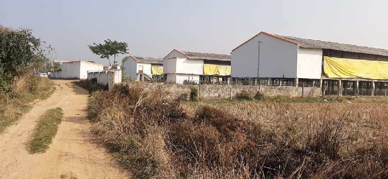 12 Bigha Agricultural land sell in Orgrm,Bardhaman